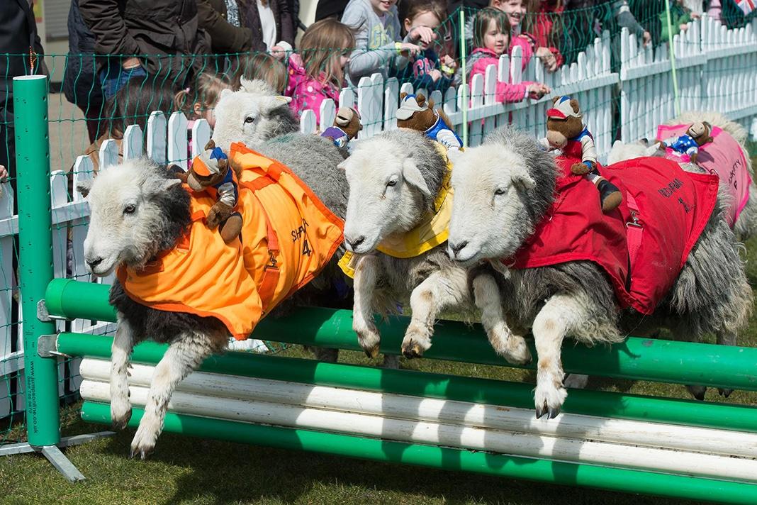 lamb national ascot1 (1)